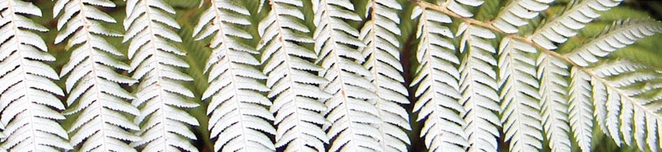 Banner-Kiwi