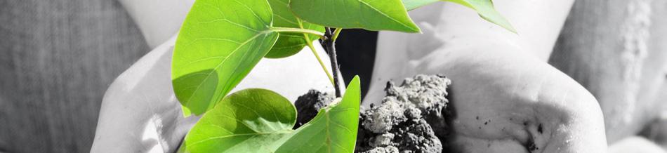 Banner-TreePlanting